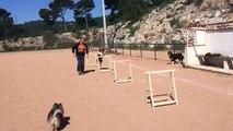 La Ciotat éducateur canin comportementaliste chiens et chiots toutes races départements 13 83