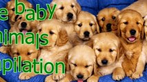 Baby animals are so cute - Cute baby animal compilation