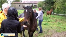 Le Refuge des Pivoines - Sauver les chevaux de la boucherie - VoltaireOnline.eu