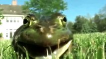 Frogs Yelling Like Humans - The Ultimate Frog Yelling Compilation