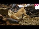 GoPro POV Video: Search & Rescue dogs in Nepal rescue earthquake survivors- TomoNews