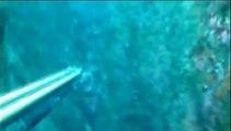 Pescasub: Dentice 7,8 chili Spearfishing Pesca sub