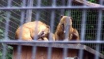 Linz, Austria Tourism : Linz Tourism: Linz Zoo