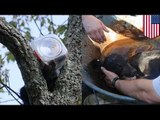 Bear cub stuck in cookie jar rescued from tree after battling firefighters