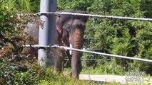 Elephant Memories - A Herd of Elephants saying Good Bye - Unforgettable Baby Elephants