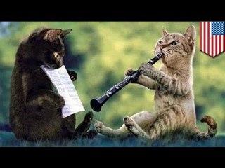 А ваша кошка играет на фортепьяно?