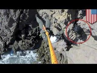 Оказавшегося над пропастью лабрадора спасли с помощью вертолёта
