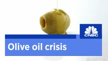 Italy's olive oil crisis