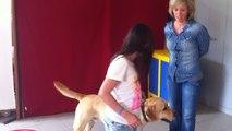 Des élèves se familiarisent avec des chiens