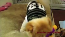 Cute Funny Kitten Cats And Puppies Dogs Compilation 2013 EPIC   10 Minutes! HD
