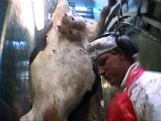 Cattle Slaughter 3