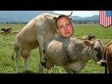 New York men arrested for having sex with cows