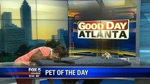 Suicide de chat en direct à la TV : saut de la mort!