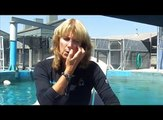 Hawaiian monk seal: Marine biologist Terrie Williams talks about her work with the endangered seals.