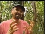 (Forêt d'Amazonie]