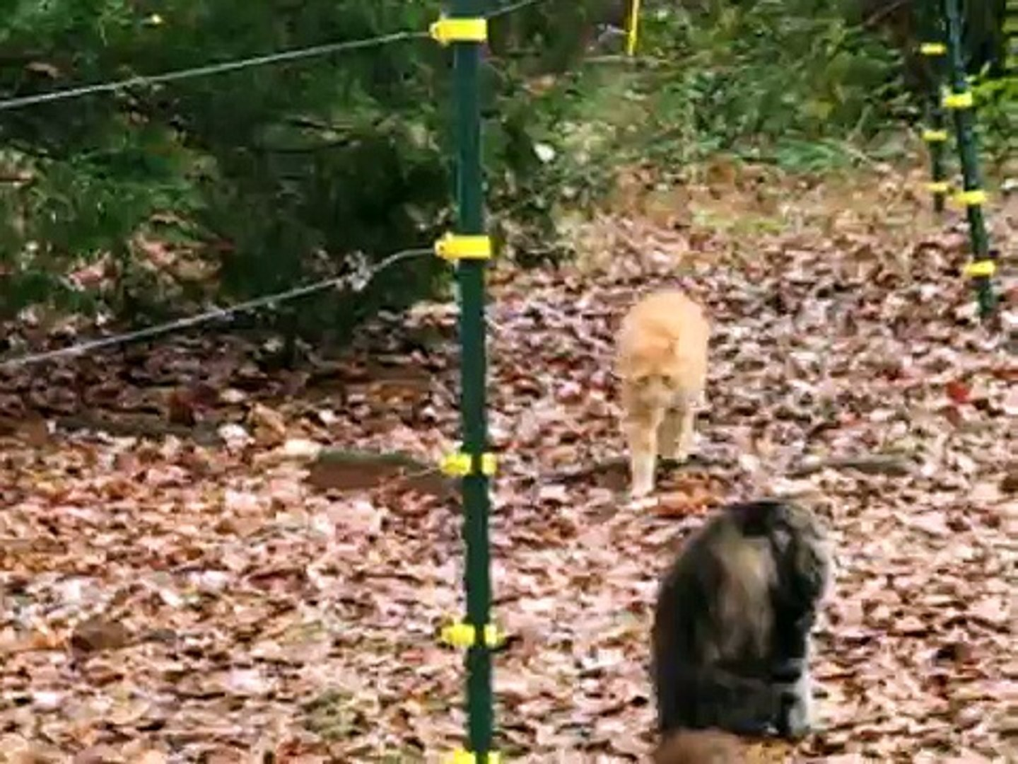 Cat gets SHOCKED by Electric Fence
