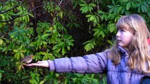 Hand Feeding Birds -  Robin Bird Singing a Song and Feeding - Wildlife in Cornwall