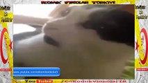 I Love You Kelimesini Bir 'de Kedi 'den Dinleyin ( Komik Video )