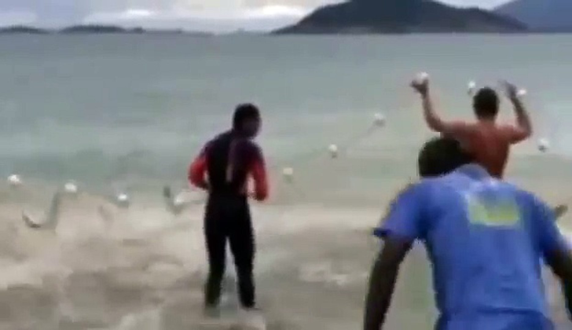 Pesca da Tainha.   Кефаль,Рыбалка