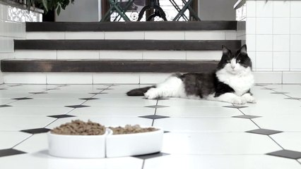 Whiskas Commercial 2014