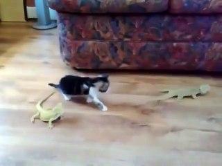 Ödü bokuna karışan kedi