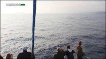 Blue Whale Kinko Greets Dana Point Whale Watching Passengers