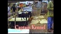 Game Dog Collector Eu Yard Tour I - Pit Bull DVD - Teaser