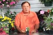 Planting & Growing Herbs : Growing Herbs: Peppermint Herb