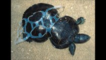 Result of pollution on animals : scary photos!