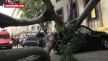 Accident à Bastia : un arbre écrase 3 voitures