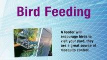 Relax By Feeding Wild Birds
