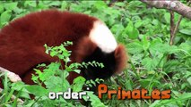 Primates- What is a Primate?