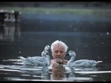 Konrad Lorenz Experiment with Geese