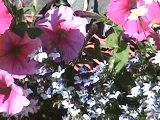 Comment enlever et relocaliser un nid d'abeilles...How to remove  bees nest