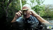 Jeremy Wade Swarmed by Amazon River Dolphins | River Monsters