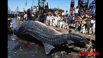 Los secretos de la NASA y Monstruos marinos reales: Criaturas marinas extrañas de las profundidades