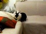 Fiocco gioca sul divano