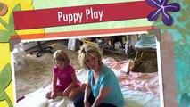 Dazzzle's New Samoyed Puppies