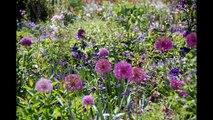 Giverny - Palettes de couleurs dans les jardins de Claude Monet