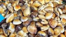 Shellfish Species Shrinking as Rising Carbon Emissions Hit Marine Life
