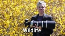 5D Mark II vs 5D Mark III comparison: Portraits, studio, landscapes, wildlife, night, and HDR review