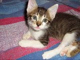 Fostering Kittens and Cats A Rewarding Experience