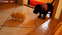 Puppies Barking Compilation   Cute Dog Barking Videos NEW  NEW funny 2015