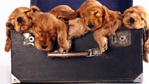 Music to help your dog get to sleep: Pet music, animal music, music for dogs, puppy music.