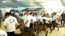 LE GRAND PRIX FESTI ELEVAGE - Michel Hurteau éleveur de chèvres.