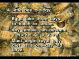 Honey Bees and Beekeeping 4.2: Queen Rearing