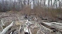 Finding Driftwood for an Aquarium