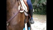 Concours complet d'équitation.