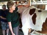 Evaluating sore horses - Lame or bucking horses April Battles Holistic Horse Works