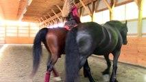 Sandra Beaulieu, Andalusian Lipizzan Dressage Horse Performs with Friesian Horse at Liberty